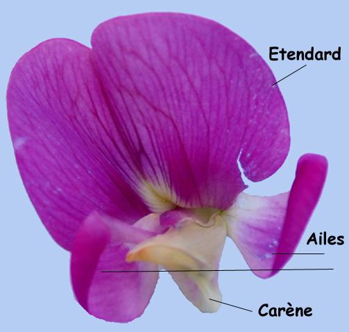 Lexique Botanique