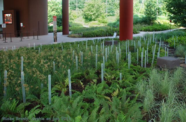 Les joncs lumineux au quai branly for Jardin quai branly