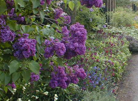 hidcote manor le jardin des roses. Black Bedroom Furniture Sets. Home Design Ideas