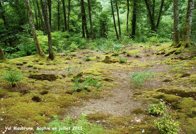 Mousse jardin avec les meilleures collections d 39 images - Jardin japonais mousse ...