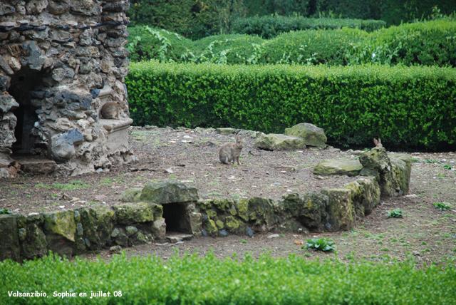 Valsanzibio leporarium for Abri lapin exterieur