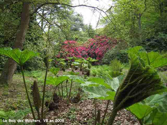 Le Bois des Moutiers gunneras et azalées ~ Les Bois De Sophie
