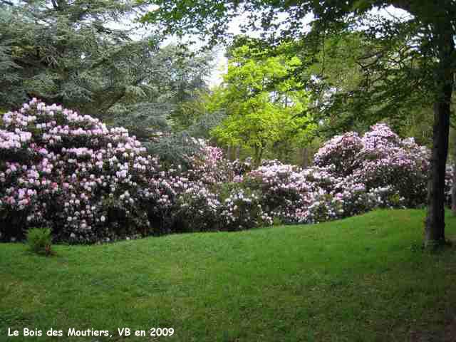 Le Bois des Moutiers rhododendrons et azalées ~ Les Bois De Sophie